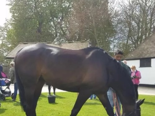 Meeting horses at Lambourn open day - Bubbablue and me