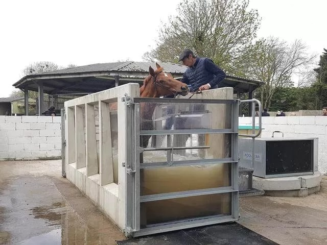 horse water therapy