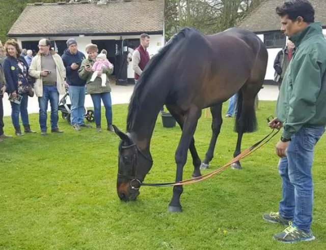 sprinter sacre on display