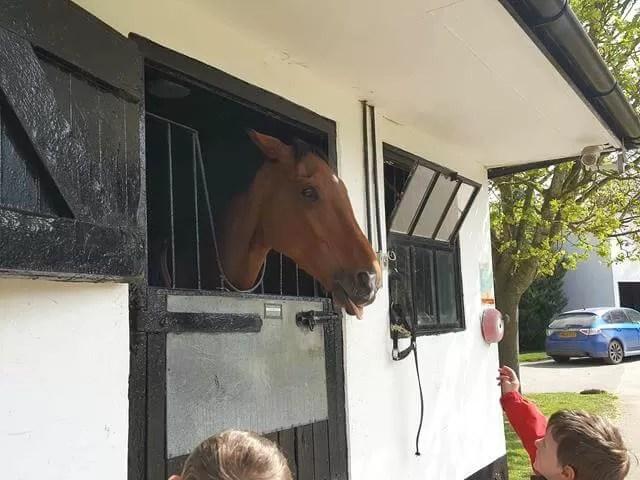 talking to race horses