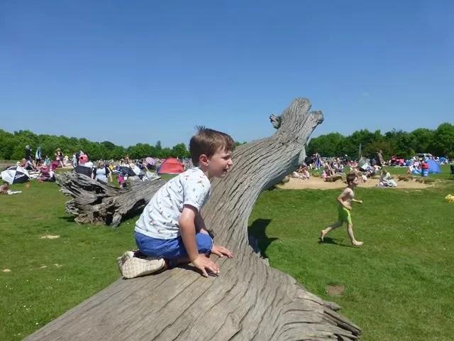 tree trunk climbing