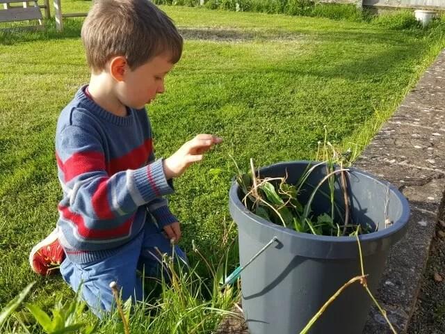 weeding in buckets