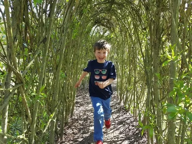 willow tunnel at felbrigg hall