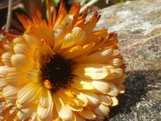 wildflowers in the garden