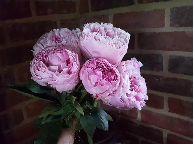 My Sunday Photo - peonies bouquet