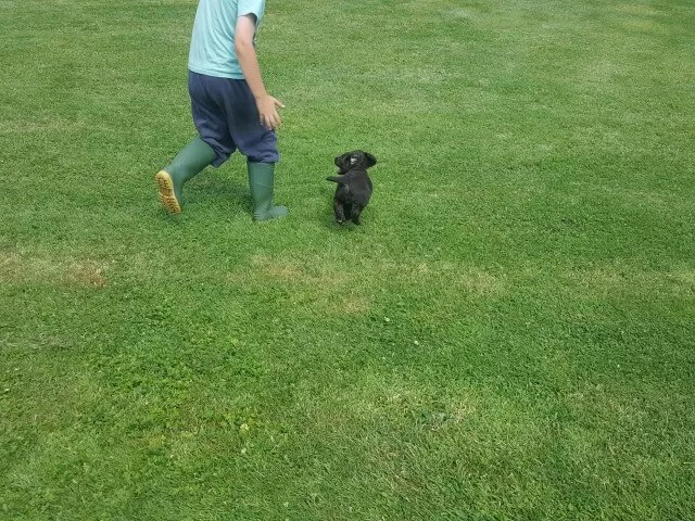 My Sunday Photo - puppy and son on the run