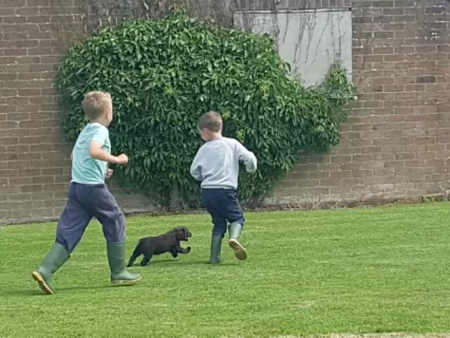 cousins playing with the puppy