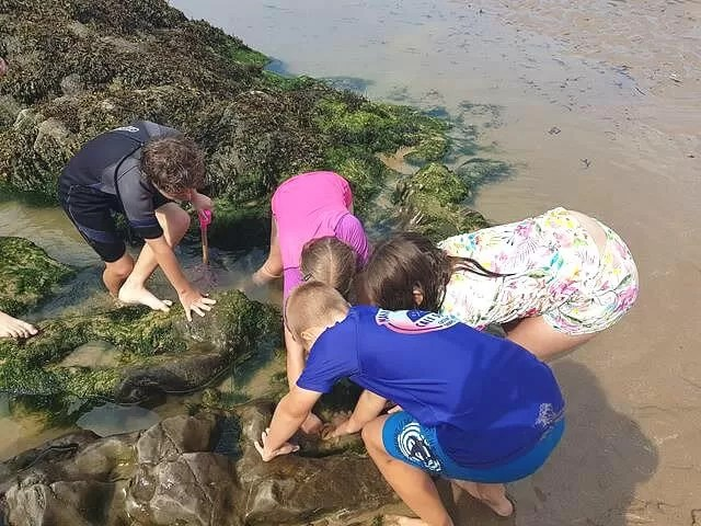 rockpooling at caswell bay