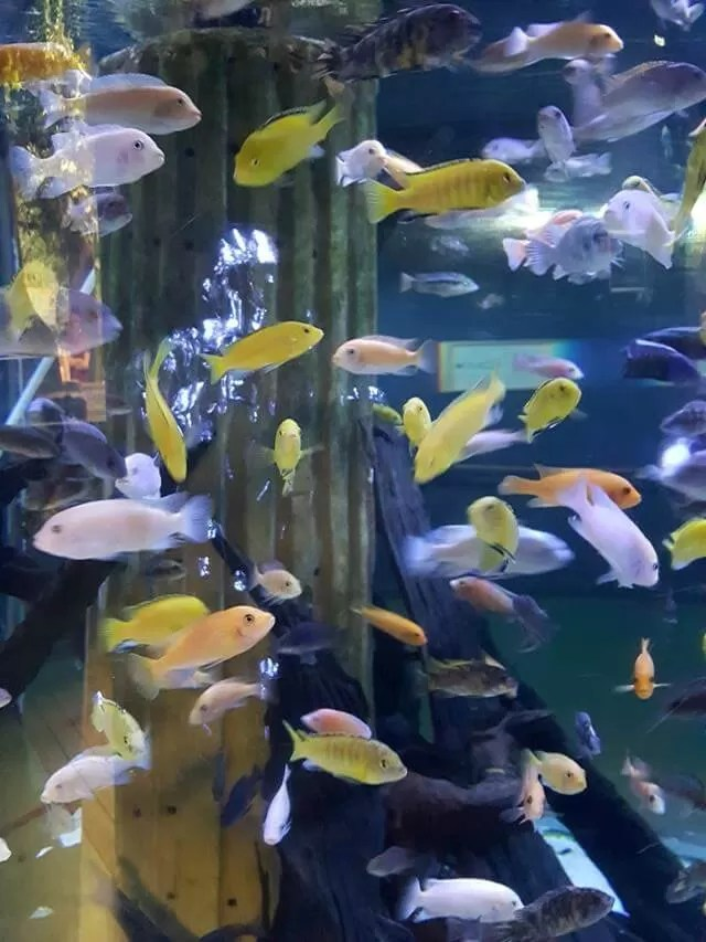 coloured fish at blue reef aquarium