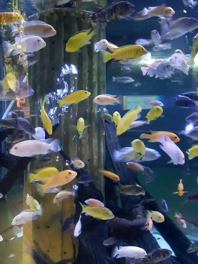coloured fish at blue reef aquarium