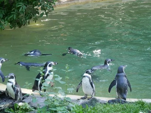 penguins sitting on the site of pool