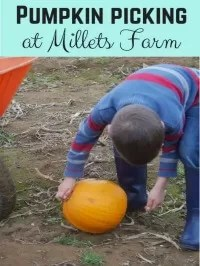Millets farm pumpkins