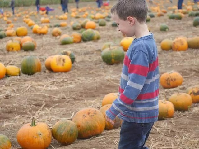 examining pumpkins