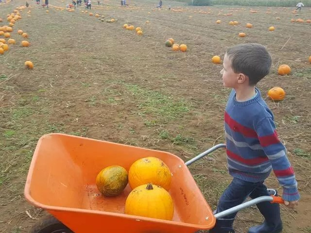pushing the pumpkin whelbarrow