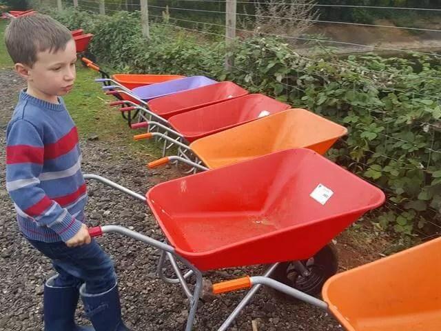 wheelbarrow choices at millets farm pumpkin picking