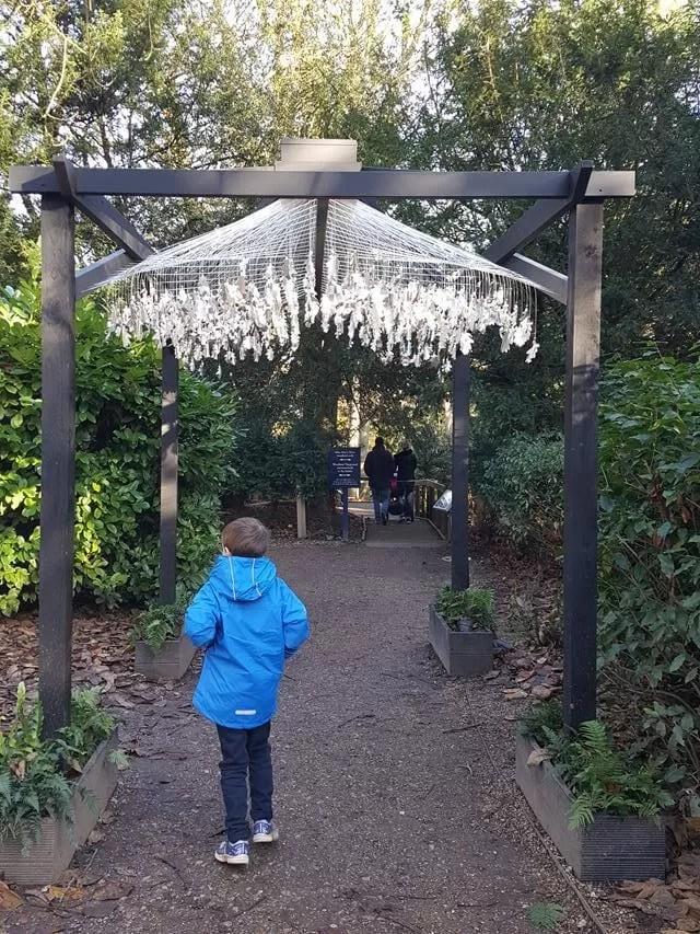 walking through the oak leave display