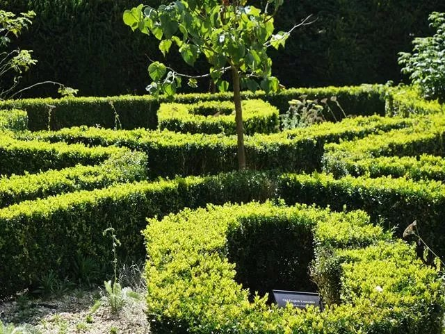 topiary hedges at marwell
