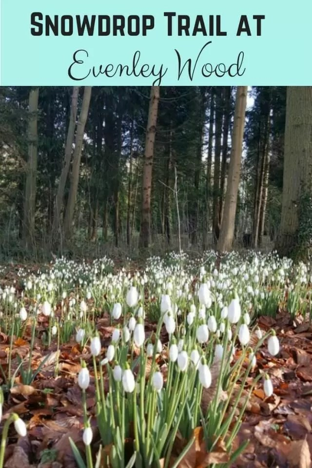 Evenley Wood Garden snowdrop trail - Bubbablue and me