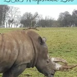 Experiencing ZSL Whipsnade Zoo out of season