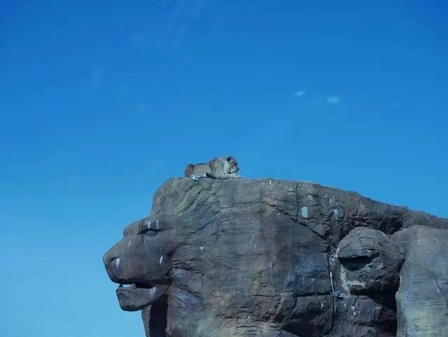 lion atop a rock