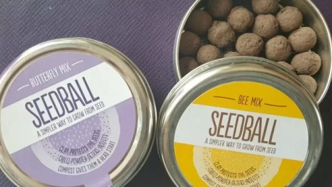 prezzybox flower seedballs