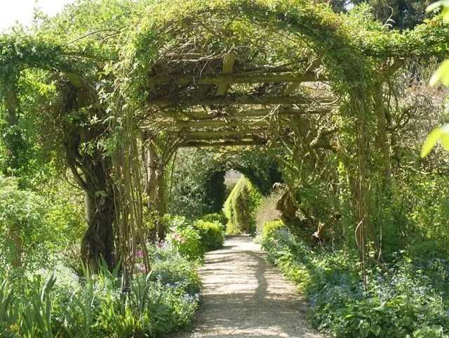 wisteria archway at rousham