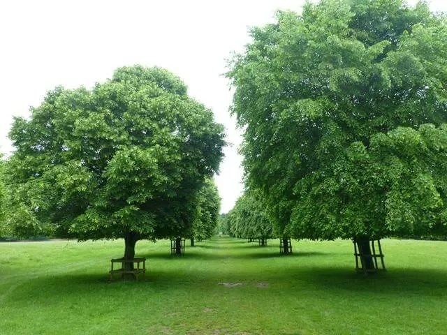 tree avenue walk at dyrham park