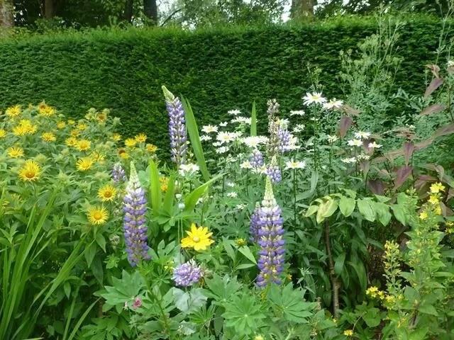 flowers in castle drogo gardens