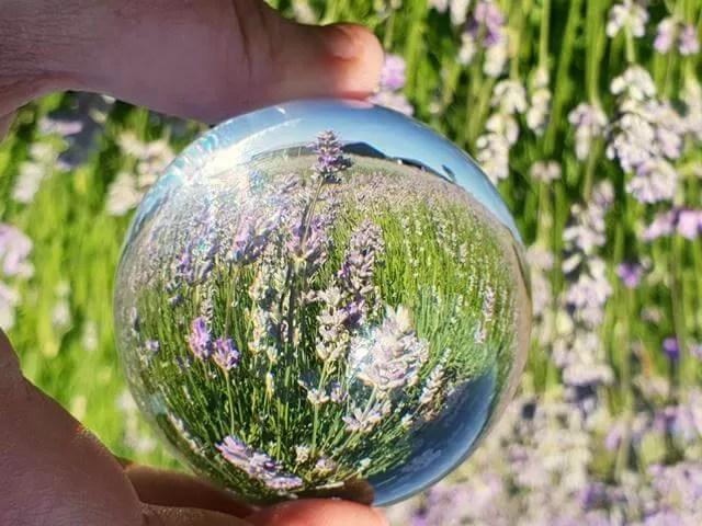 lensball lavender