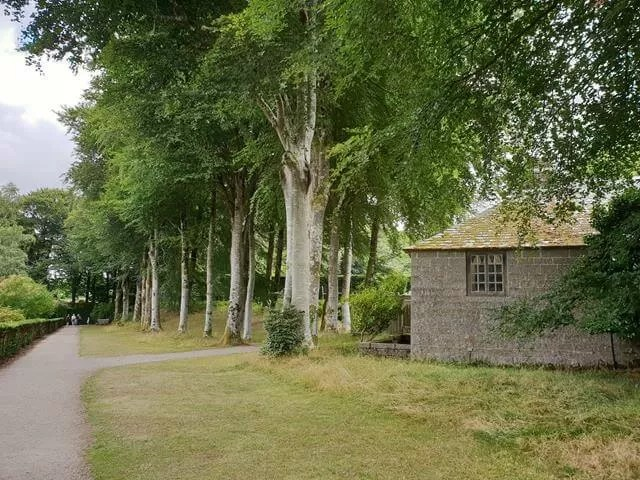 woods at castle drogo
