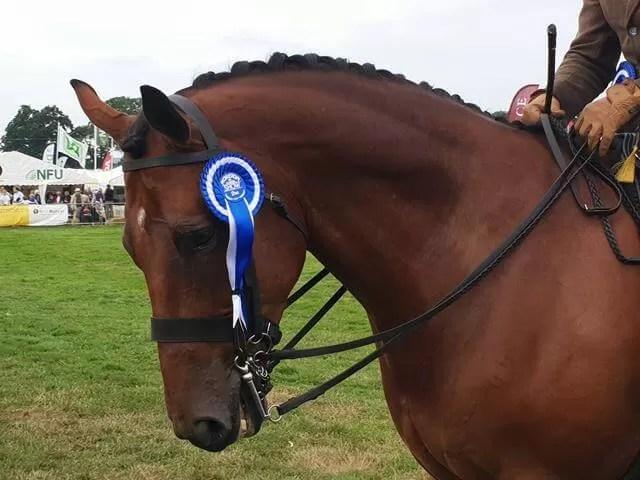horse rosette