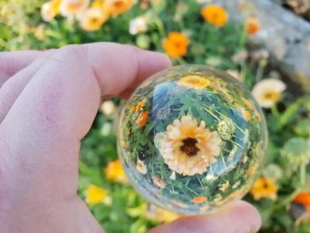 marigold lensball flower photo