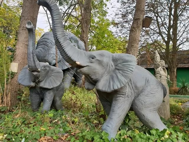 elephant jungle ride