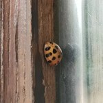 Project 52 2018 week 40 – ladybird