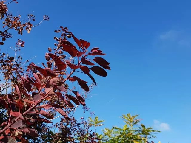 red branches and leaves