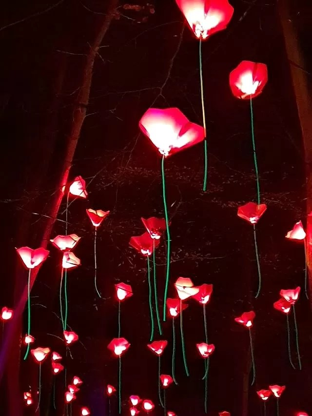 poppies light display in trees