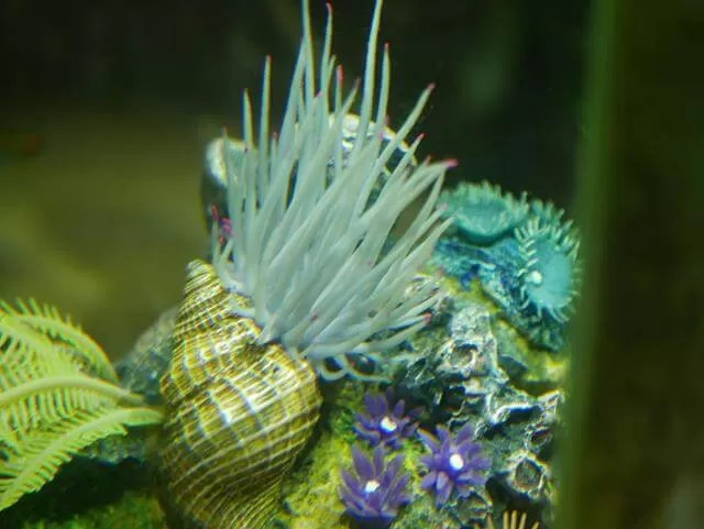inside an acquarium