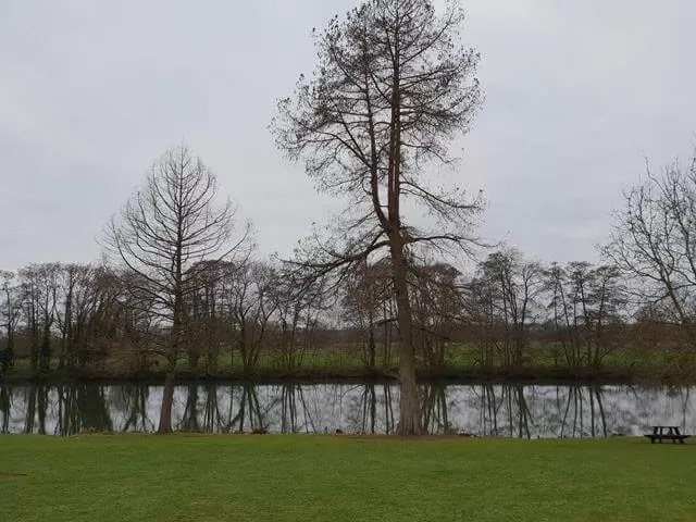 reflection of trees along thames riverbank