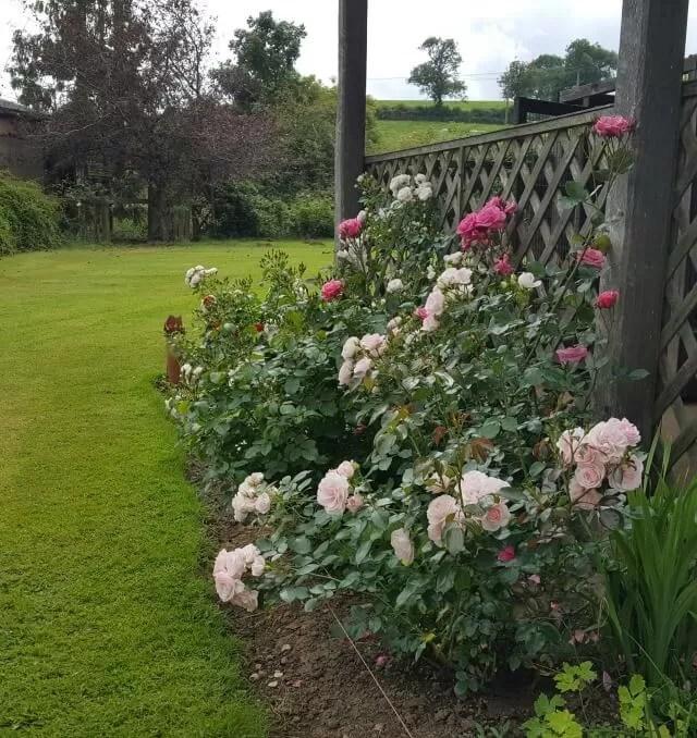 Gardening tips for non gardeners.
