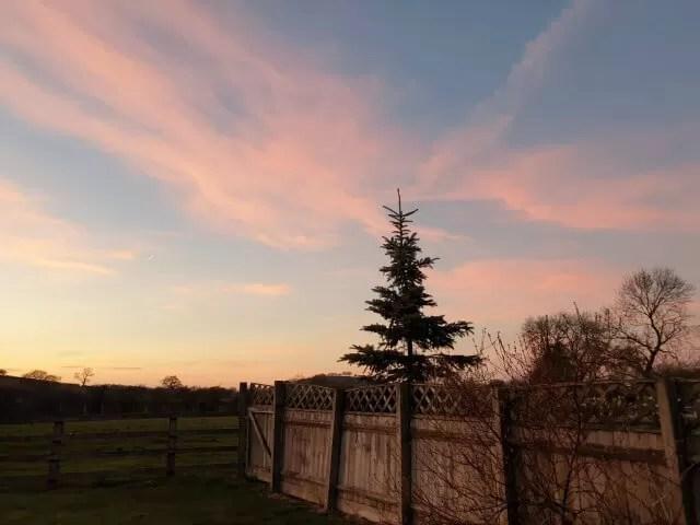 christmas tree against sunset