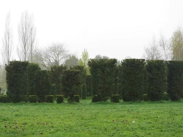 topiary hedge circle