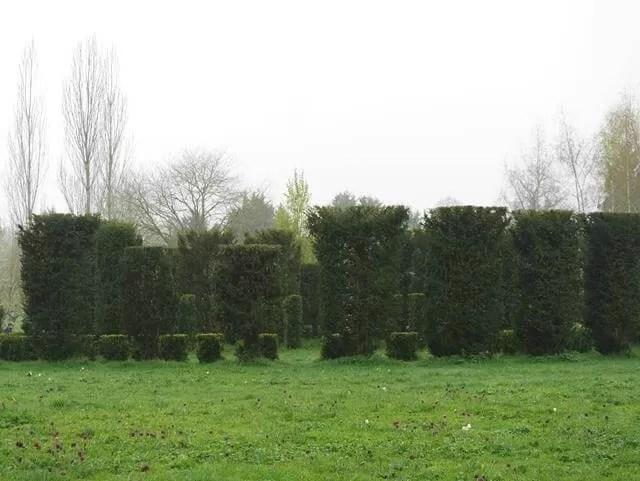 topiary hedge circle