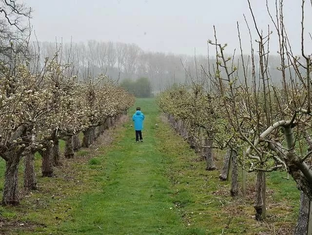 walking along the orchard