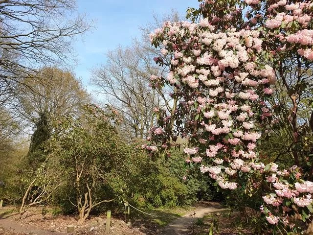 blossom in castle howard grounds