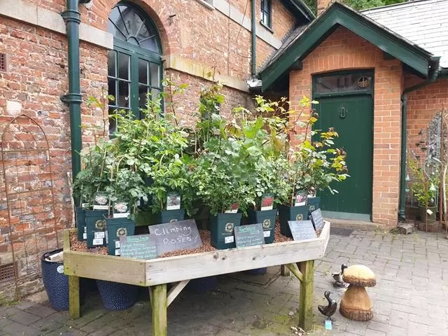 flowers at stable shop