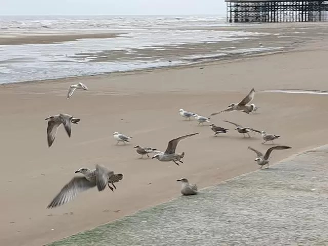 seagulls taking off