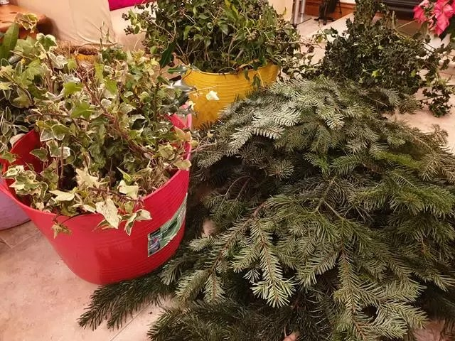 foliage choices collected for wreath making