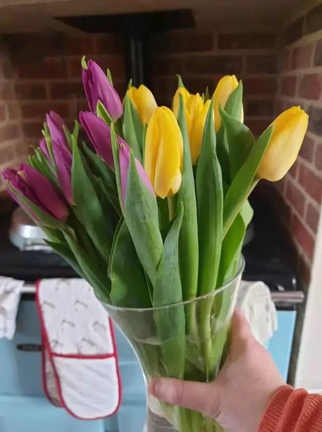 bunch of mixed tulips