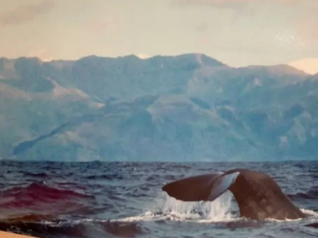 whale watching from a boat in kaikoura