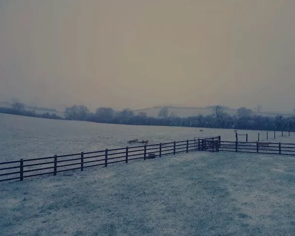 Project 52 2020 Week 9 – snowy morning